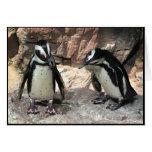 Pingüinos Felicitación