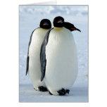 Pingüinos Felicitaciones