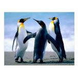 Pingüinos Foto Maravilhosa Tarjeta Postal
