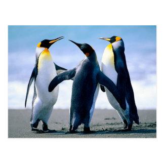 Pingüinos Foto Maravilhosa Tarjetas Postales