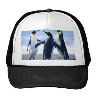 Pingüinos Gorras