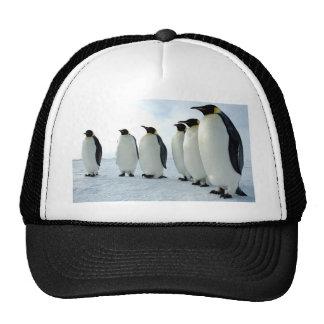 Pingüinos Gorras De Camionero