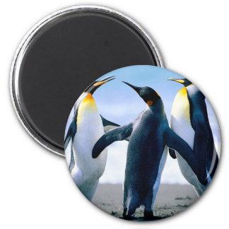 Pingüinos Imán Redondo 5 Cm