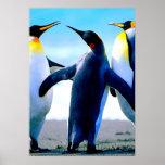 Pingüinos Impresiones