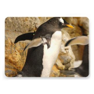 Pingüinos Comunicados Personales