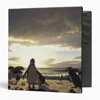 """Pingüinos Negro-con base de África, Suráfrica Carpeta 1 1/2"""""""
