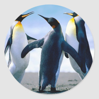 Pingüinos Pegatina Redonda