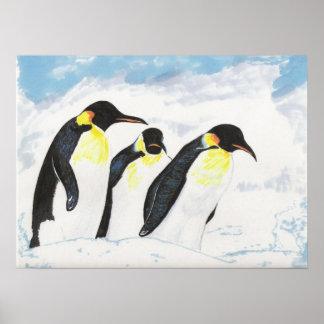 Pingüinos Póster