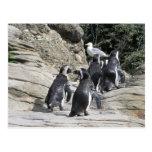 Pingüinos que caminan postales