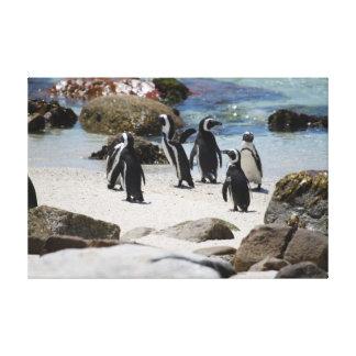 Pingüinos surafricanos impresiones en lona estiradas