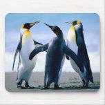 Pingüinos Tapete De Raton