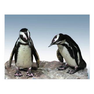 Pingüinos Postal