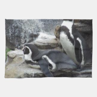 Pingüinos Toallas