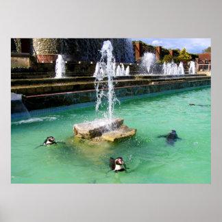 Pingüinos y fuentes de Humboldt Póster