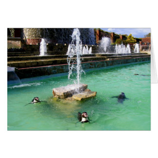 Pingüinos y fuentes de Humboldt Felicitación