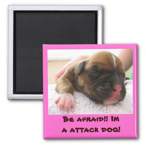 ¡pink1, tenga miedo!! ¡Im un perro de ataque! Imán Cuadrado