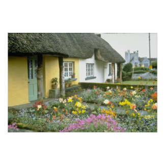 Pink Adare, Limerick flowers Poster