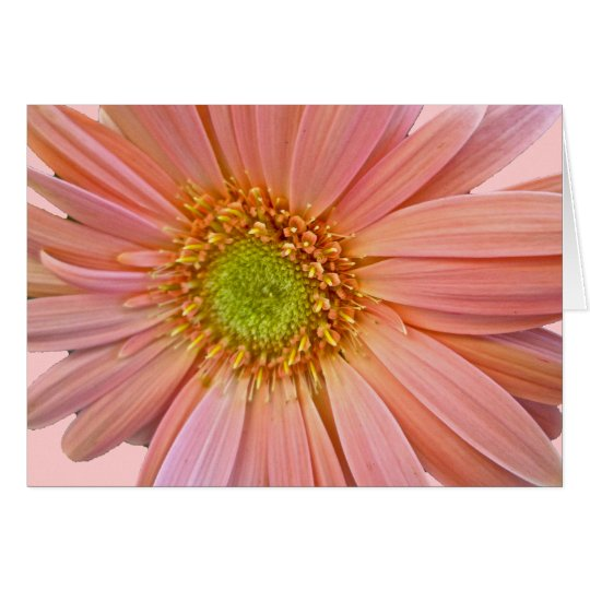 Pink African Daisy Note Card