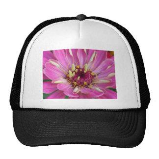 pink African Daisy Trucker Hat