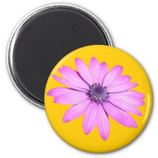 Pink Afrıcan Daisy With Transparent Background Fridge Magnets