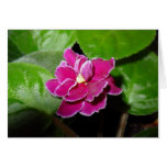 Pink African Violet Blank Card