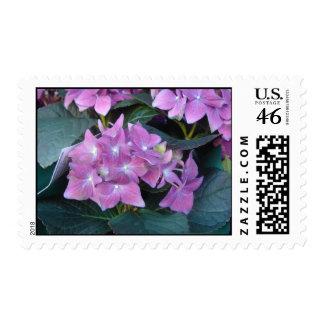 Pink African violet Stamp