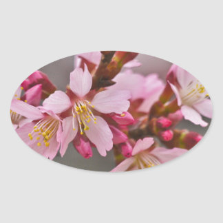 Pink Against A Gray Sky Japanese Cherry Blossoms Oval Sticker