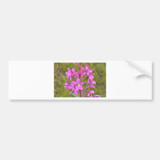 Pink Alaskan Fireweed flowers in bloom Car Bumper Sticker