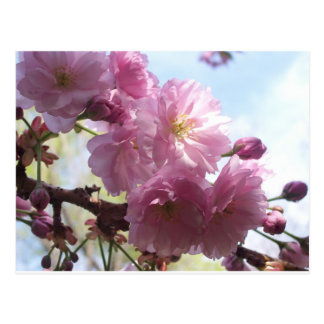 Pink Almond Branches Blossoms Flowers Tree Destiny Postcard