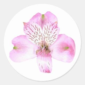 Pink Alstroemeria Flower Round Sticker