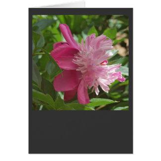 Pink, Always Card
