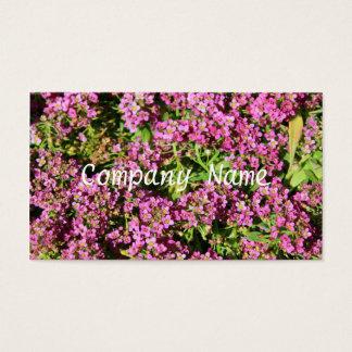 Pink Alyssum Flowers Business Cards