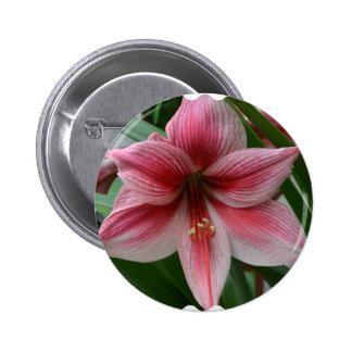 Pink Amaryllis Button