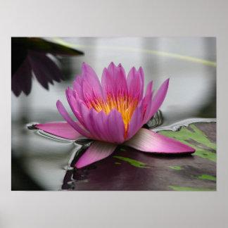 Pink Amazon Water Lily (Lotus) Canvas Print
