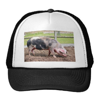 Pink and black sow trucker hat