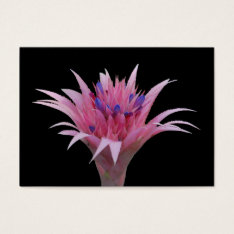 Pink And Blue Aechmea Aceo Business Card at Zazzle