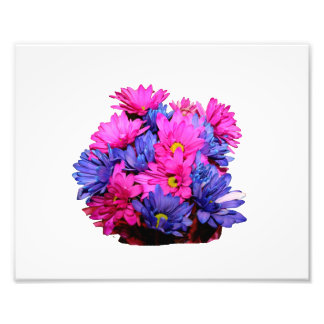 Pink and Blue Daisy Flower Bouquet Image Photo Print