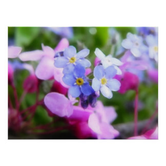 Pink And Blue Spring Flowers Poster