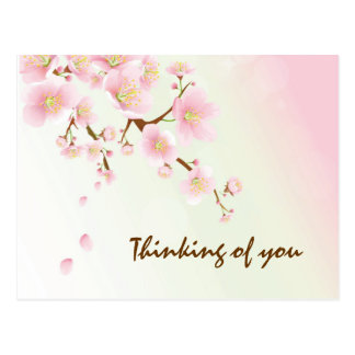 Pink And Cream Magnolia Blossom Post Cards
