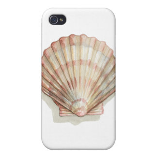 Pink and Cream Seashell Cover For iPhone 4