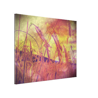 Pink And Gold Wheat Canvas Print