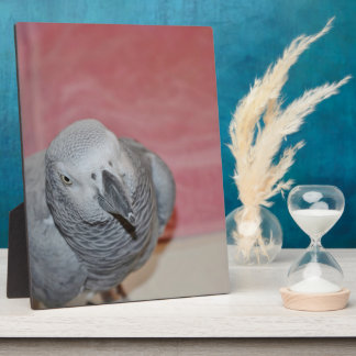 Pink and Gray African Grey Parrot Plaque