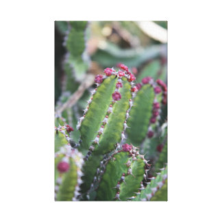Pink and green cactus canvas print