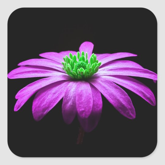 Pink and Green Daisy Square Sticker