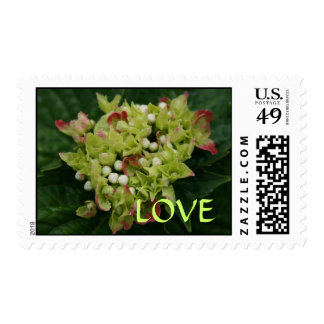 Pink and Green Hydrangea Love Postage