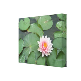 Pink and Green Lily Pad Pretty Photograph Canvas Print