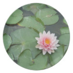 Pink and Green Lily Pad Pretty Photograph Plate