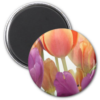 Pink and Lavender Tulips Magnet