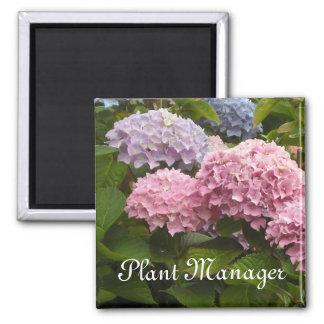 Pink and Mauve Hydrangeas Magnet