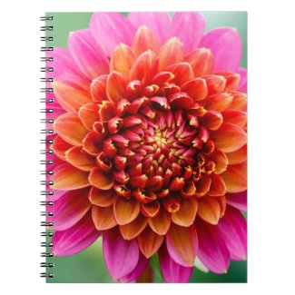 Pink and Orange Dahlia Close Up Notebook